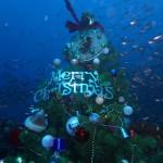 沈船のクリスマスツリー